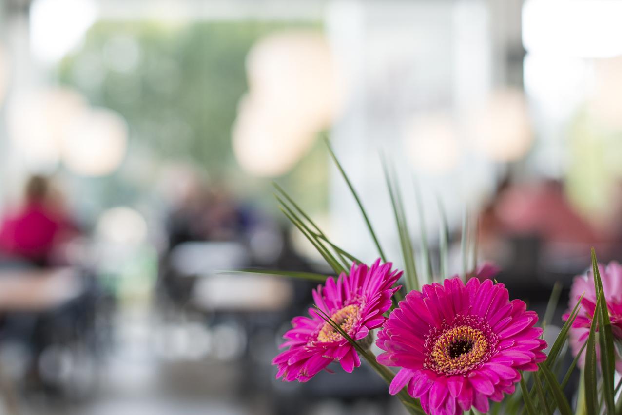 Blumen (1)_web